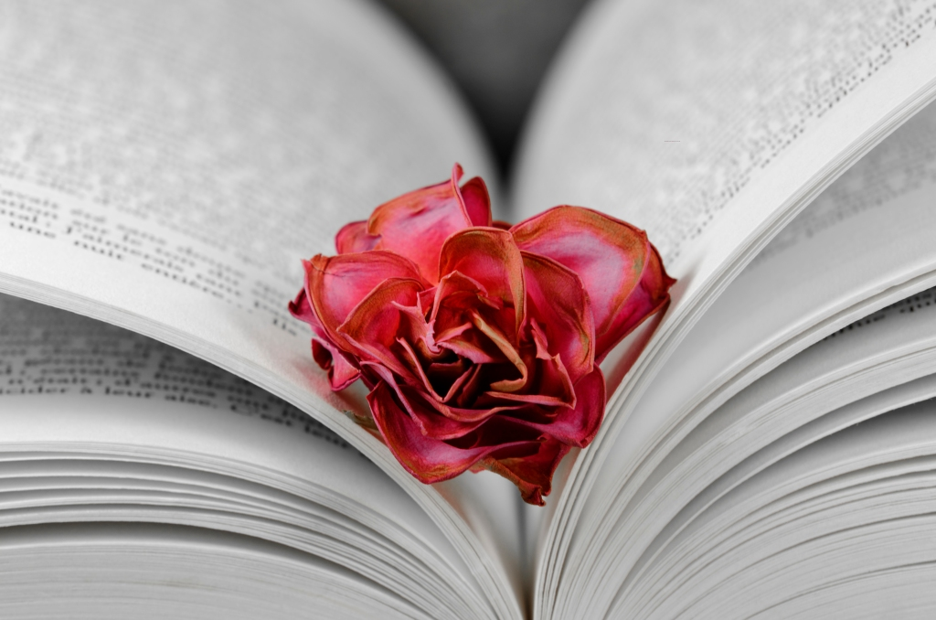a faded rose between the pages of an open book